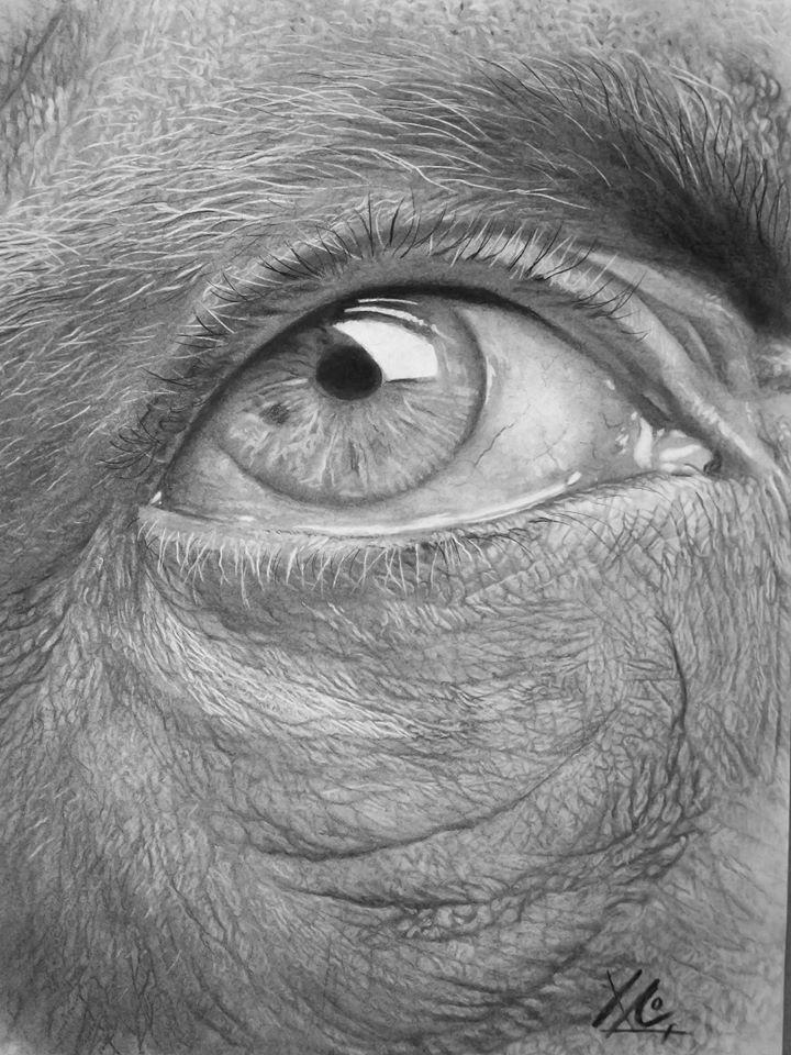 Estudo dun ollo