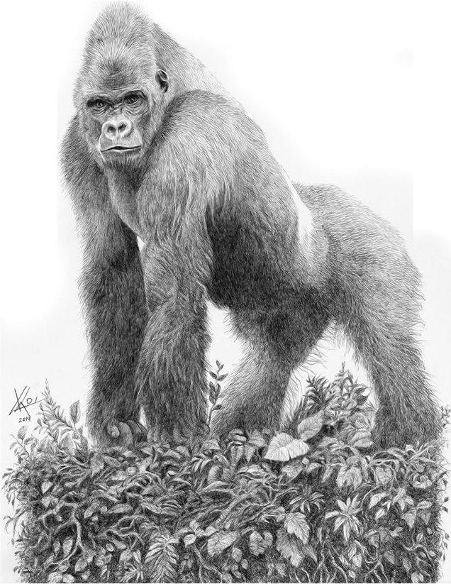 Macho de gorila de montaña II