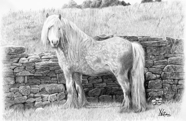 White horse by the wall.
